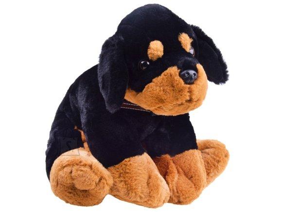 Mängu kaisuloom koer