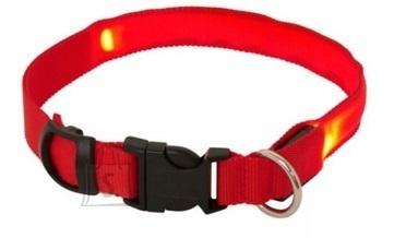 Koera LED kaelarihm M kuni 51CM Punane