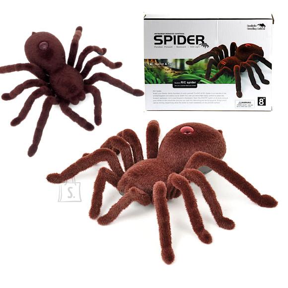 Tarantula ämblik kaugjuhtimispuldiga