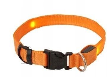 Koera LED kaelarihm M kuni 51CM Oranz