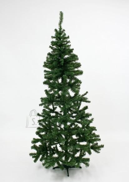 Kuusk CANADIAN PINE TREE 210cm