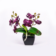 Lilla orhidee 2 oksaga 20 cm