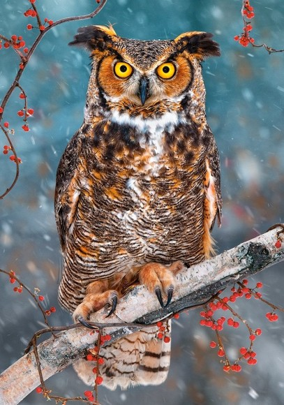 Puzzle 500 GREAT HORNED OWL 52387