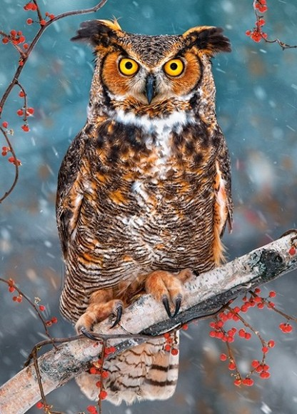 Castorland 27347. Puzzle 260 GREAT HORNED OWL