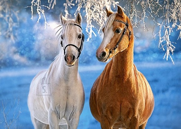 Castorland 27378. Puzzle 260 THE WINTER HORSES