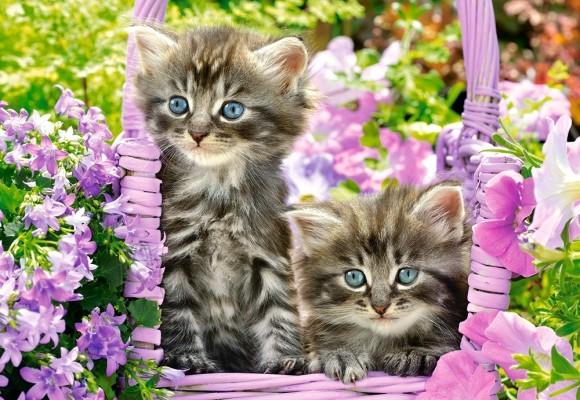 Castorland 104086. Puzzle 1000 Kittens in summer garden
