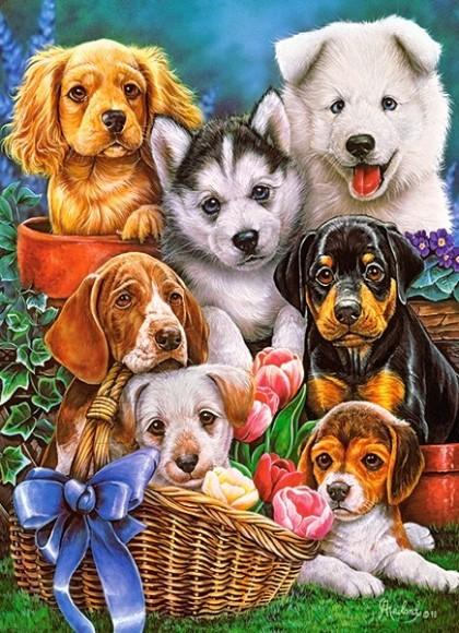 Castorland 030323. Puzzle 300 Puppies