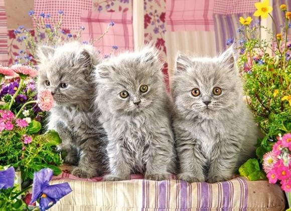 Castorland 030330. Puzzle 300 Three Grey Kittens