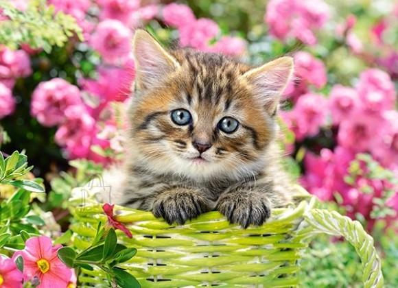 Castorland 111039. Puzzle 100 Kitten in Flower Garden