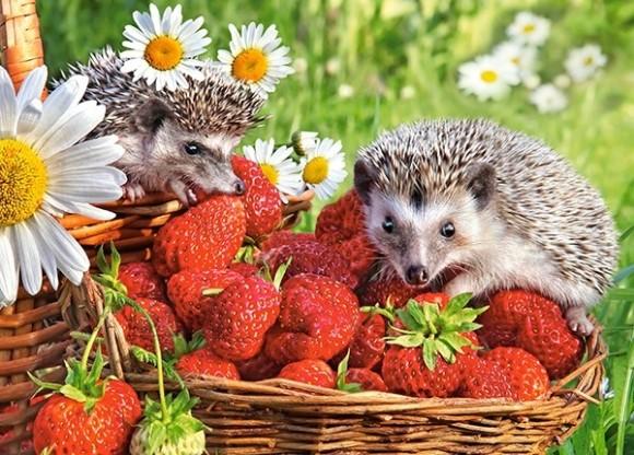 Castorland 27484. Puzzle 260 Strawberry Dessert