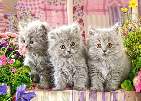 Castorland 27491. Puzzle 260 Three Grey Kittens