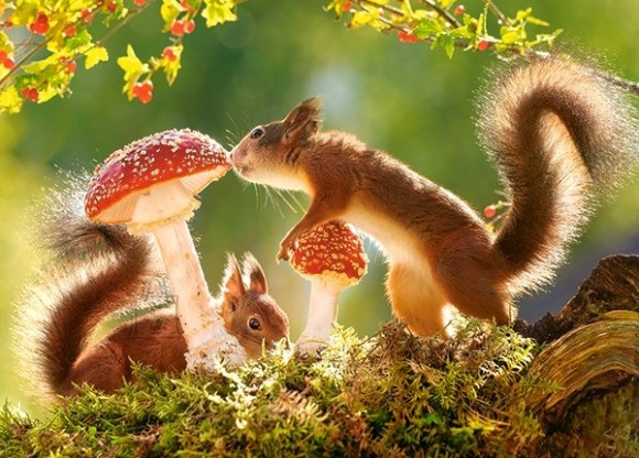 Castorland 27521. Puzzle 260 Squirrel's Forest Life