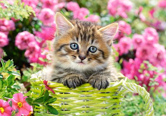 Castorland 52974. Puzzle 500 Kitten in flower garden