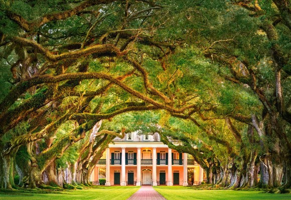 Castorland Puzzle 1000 OAK ALLEY PLANTATION 104383