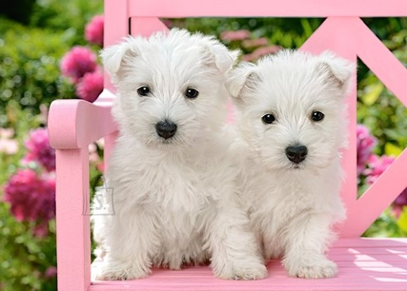 Castorland Puzzle 120 White Terrier Puppies 13494