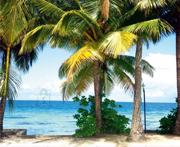 Fliis fototapeet Palm trees 360x270 cm