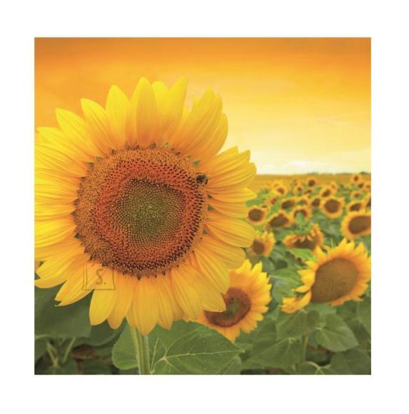 Herlitz Salvrätik 33x33/20 Sunshine