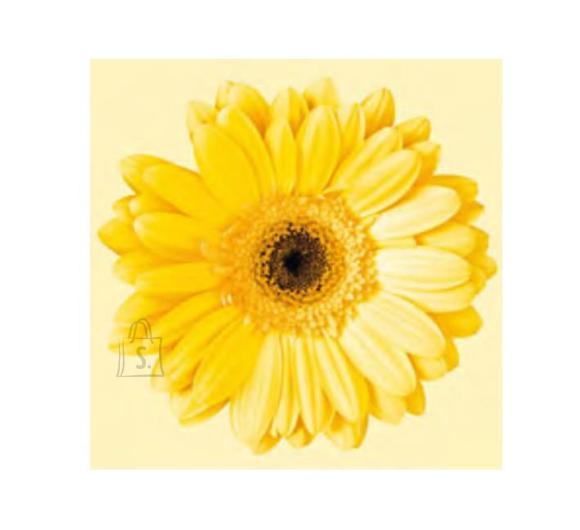 Herlitz Salvrätik 33x33/20 Gerbera yellow