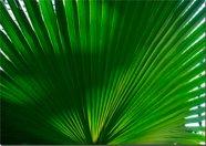 Pilt Palmileht