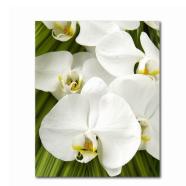 Trükipilt valge orhidee 40x50 cm