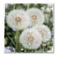 Trükipilt Lilled 50x50 cm
