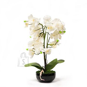Valge kunstlill orhidee