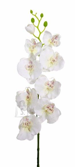 Orhidee oks valge