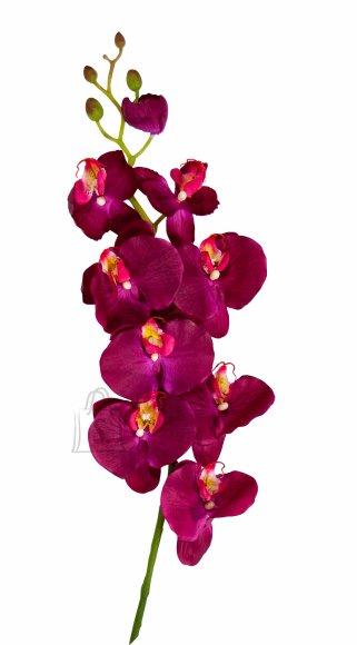 Orhidee oks punane