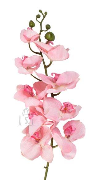 Orhidee oks roosa