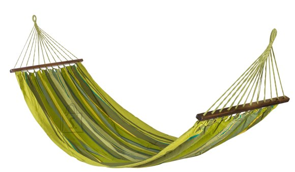 Rippkiik Iguana