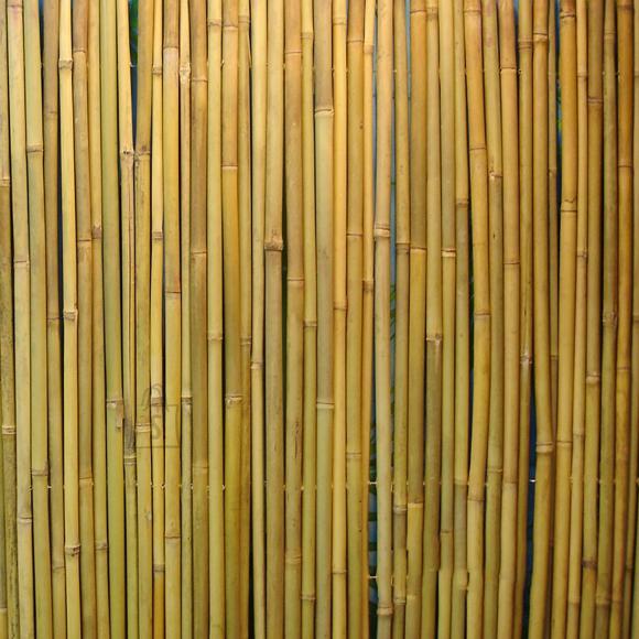 Rull bambusaed IN GARDEN D14/16mm, 1x3m