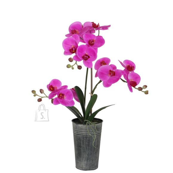 Lilla orhidee 3 oksaga IN GARDEN, H63cm