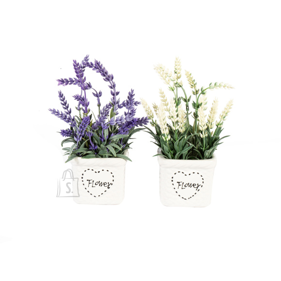 Roheline taim IN GARDEN, lavendel, mix