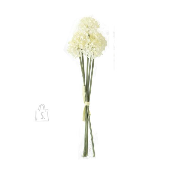 Allium 5x IN GARDEN, H38cm, valge