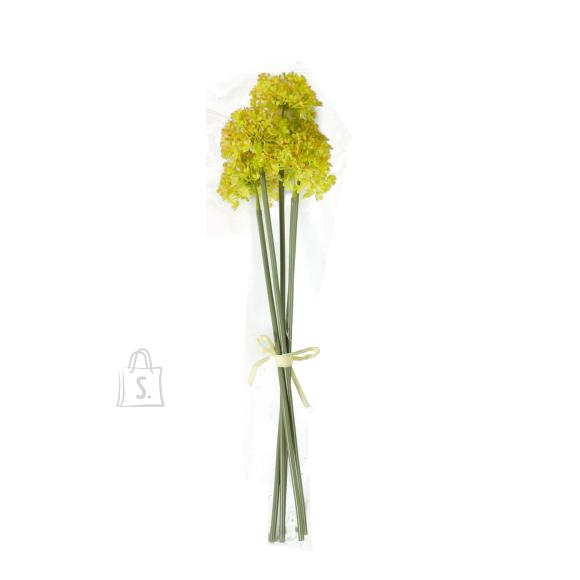 Allium 5x IN GARDEN, H38cm, roheline