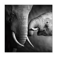 Dekoratiivpilt Elephants