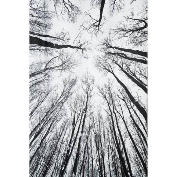 Pimendav kardin Forest 135x240 cm