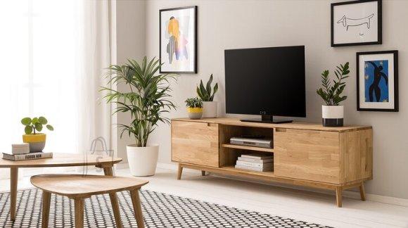 Tammepuidust TV-alus Scan 150