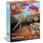 Geoworld Lendav Koletis Pteranodon skelett