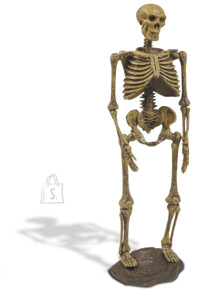 Geoworld jääaja inimese skelett