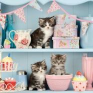 Salvrätikud kassipoeg riiulil