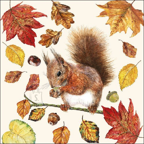 Salvrätikud oravaga