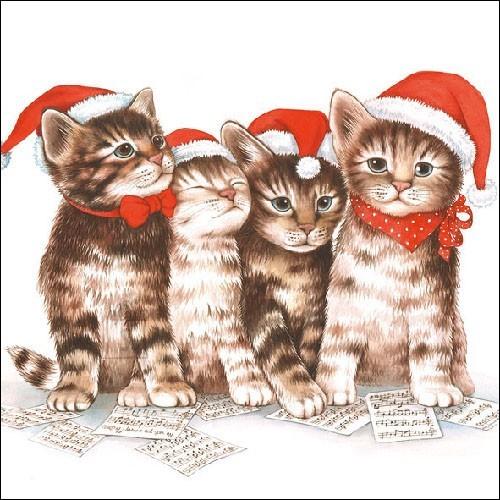 Salvrätikud kassidega