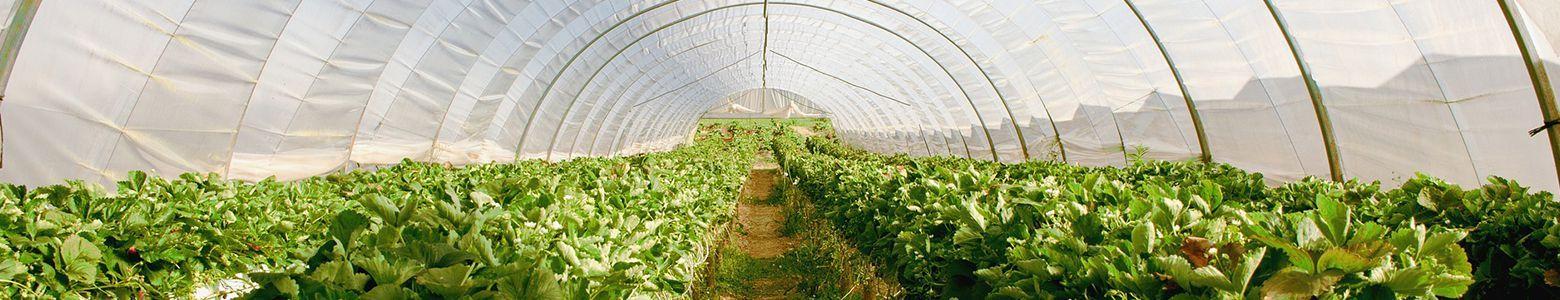 Kasvuhooned ja tarvikud Shoppa.ee netikaubamajast