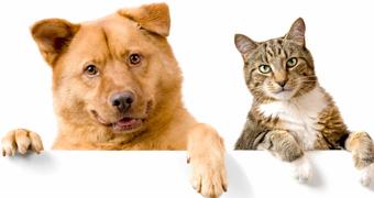 Lemmiklooma hooldamine