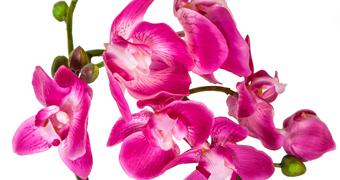 Lillepotid, vaasid & taimed