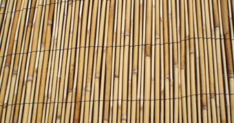 Pilliroo & bambusaiad