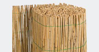 Pilliroo- ja bambusaiad