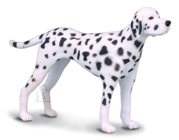 Collecta dalmaatsia koer