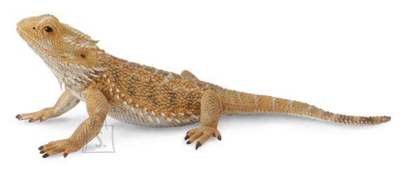 Collecta draakon-sisalik